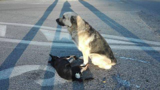 Un cane veglia l'amico investito sulla Tuscolana a Roma (da Facebook) © Ansa