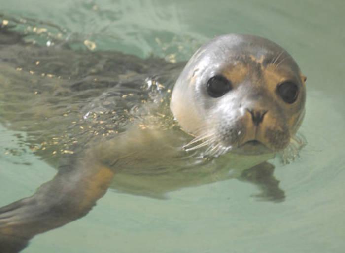 Battesimo per cuccioli foca e pinguini