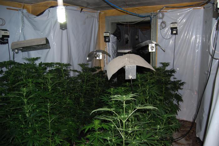 Piantagione marijuana trovata tra boschi