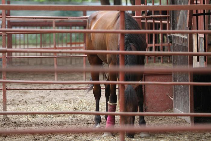 Ragazzina calpestata dal suo cavallo, gravissima
