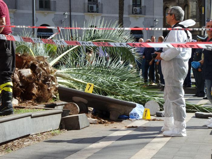 Catania, uccisa da una palma: a processo due dirigenti del comune$