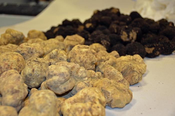 Cultura tartufo candidata Unesco