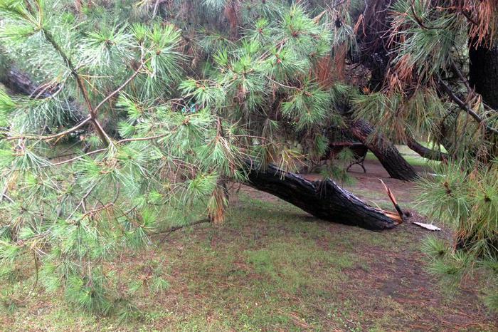 Travolto da tronco, uomo muore a Modena