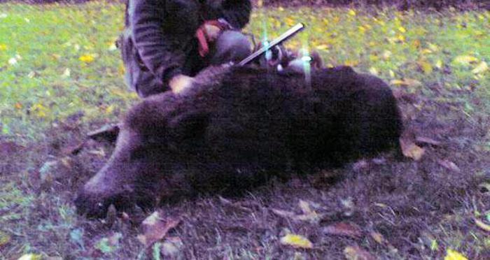 Muore mentre caccia un cinghiale$
