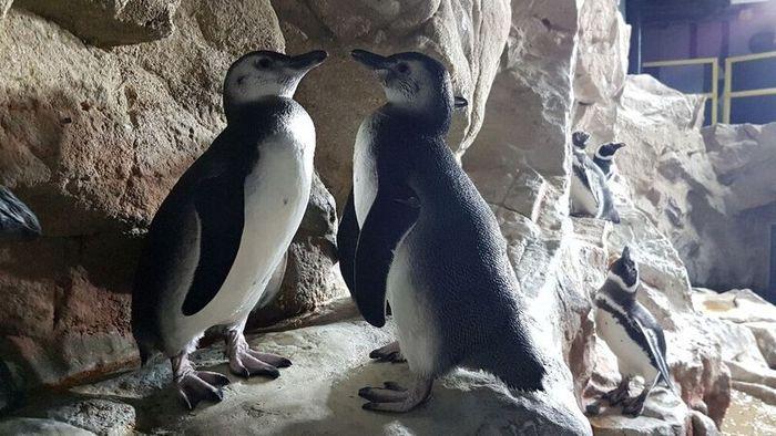 Battezzati all'Acquario pinguini e foca