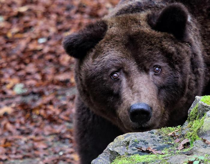 Morto Bruno,orso'comunista' di Cavriglia
