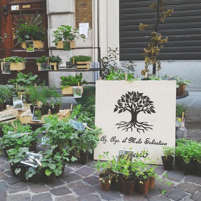 Torna 'Flor', piante incrociano libri