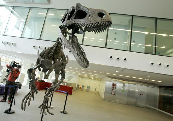 Dinosauri dall'Argentina,mostra a Padova