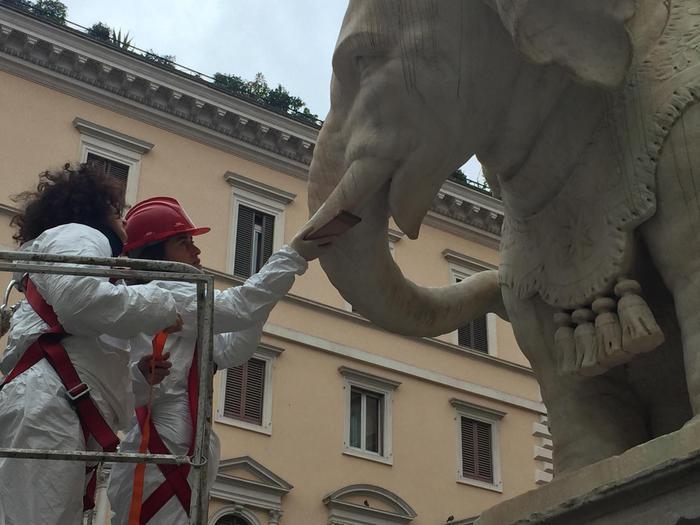 Elefante piazza Minerva, rimessa zanna