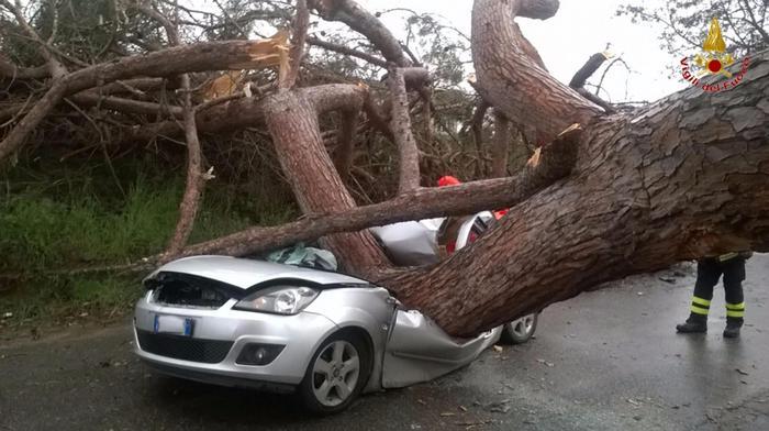 Maltempo: caduti alberi in centro Roma