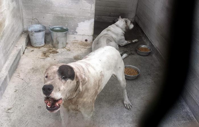 Bimbo sbranato dai cani, condannata la madre$