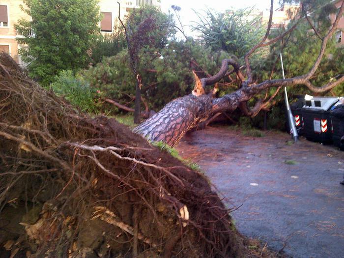 Cade albero su pensilina bus, 5 feriti