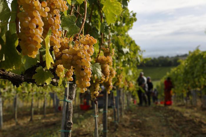 "Agroalimentare: 8 aziende Fvg al ""Welcome Italia"" a Londra"