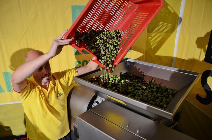 Olio: produzione cala del 42% in Sicilia