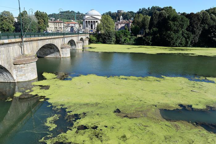 Alghe sul Po a Torino, lunedì intervento