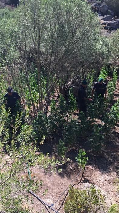 Cani Gdf scovano piantagione marijuana
