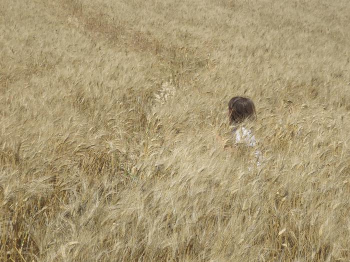 Raddusa, comincia festa del grano