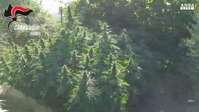 La fattoria della marijuana alle porte di roma italia for Porte francesi della fattoria