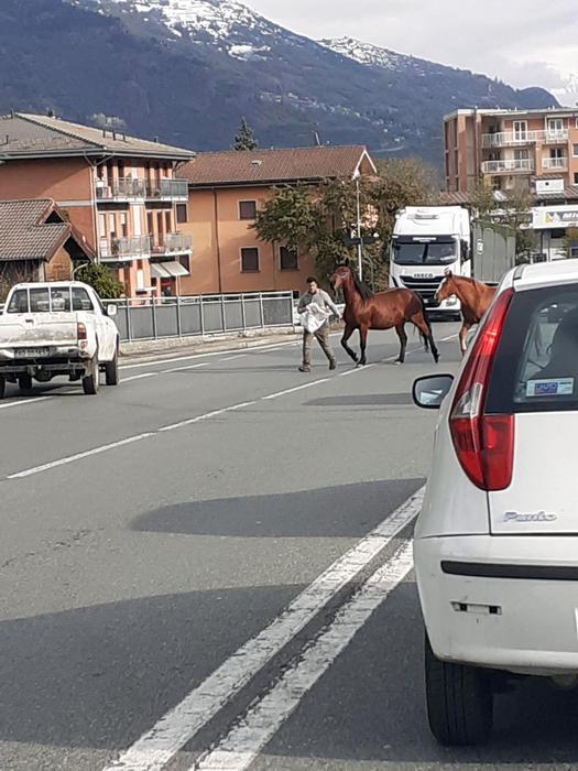 Mandria cavalli in circonvallazione Aosta, traffico in tilt - Agenzia ANSA
