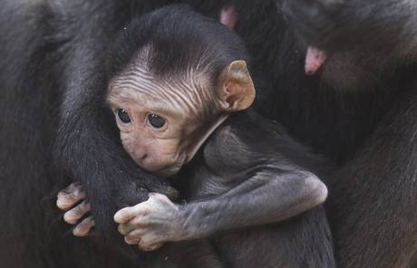 Newborn monkeys in Tel Aviv