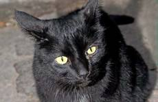 Thousands of black cats killed in Italy for fur and rituals