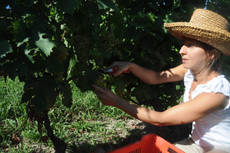 Italian wine producers expect 'quality' season in 2011