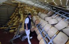 Italian cheese production hit hard by earthquake