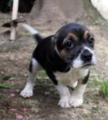 Police rescue 72 puppies brought illegally into Italy