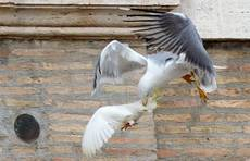 Animal protection group asks pope to stop releasing doves