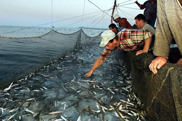 La pesca sullandroide un gioco questo