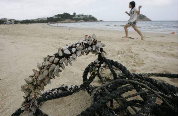 Cina : attesa per tifone Muifa, evacuati residenti coste