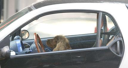 Estate, ecco le aree per cani in autostrada