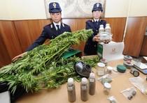 No galera per chi coltiva marijuana