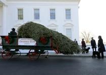Arriva albero di Natale alla Casa Bianca