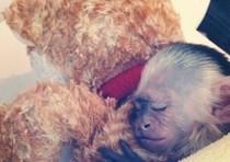 La scimmia Mally in una foto pubblicata sul profilo Twitter di Justin Biaber