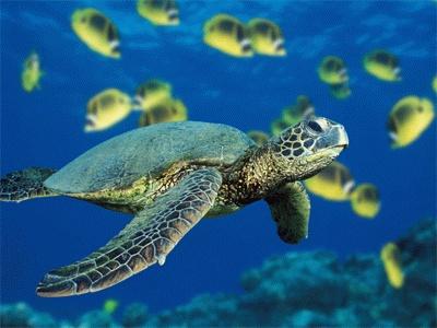 Genova le escursioni dell 39 acquario in viaggio for Acquario di tartarughe
