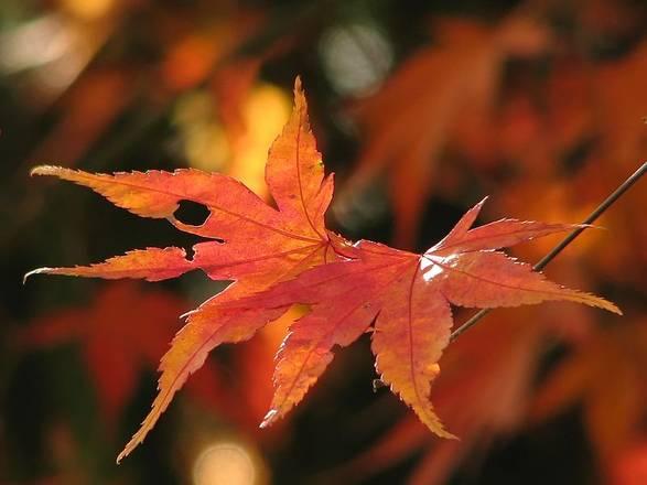 Una nuova ricetta colora gli alberi in autunno Biotech Scienza&Tecnica ANSA it