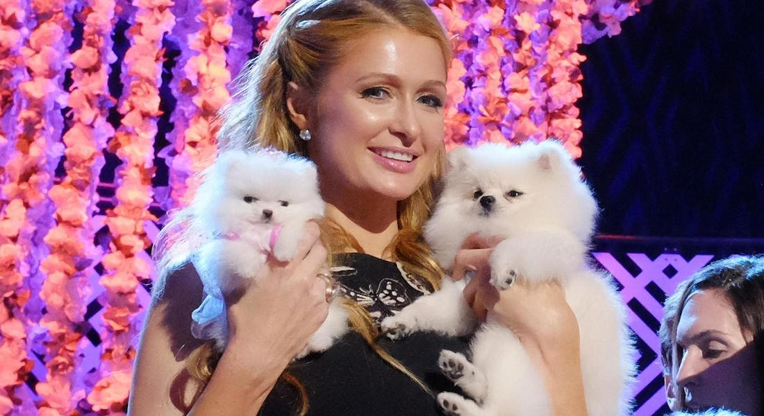 Paris Hilton al 2015 World Dog Awards © AP