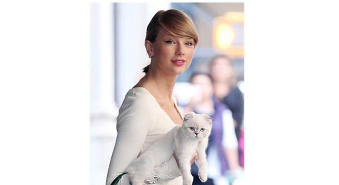 Taylor Swift Gatto Bianco. © ANSA