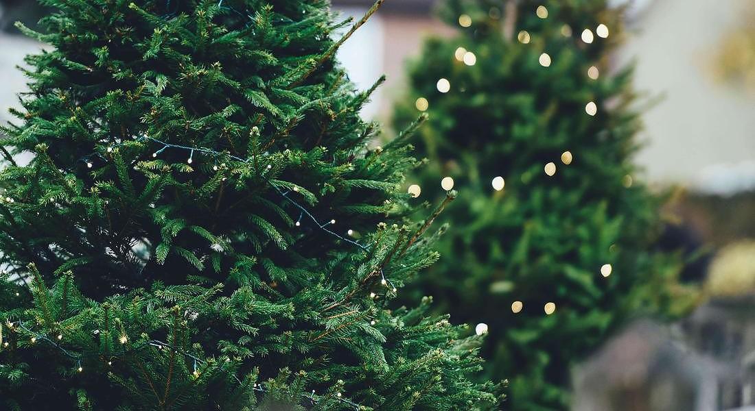 alberi di Natale © ANSA