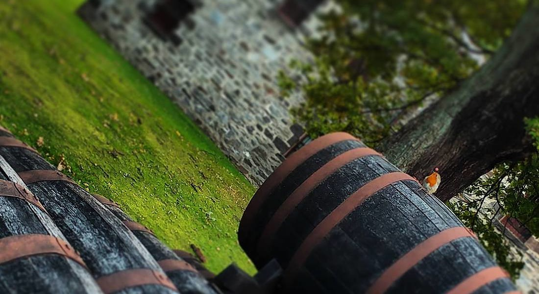 distillerie di whisky all'isola di Islay © Ansa