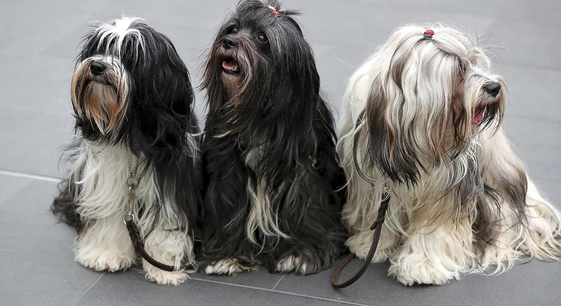 Germany Dog Show © AP