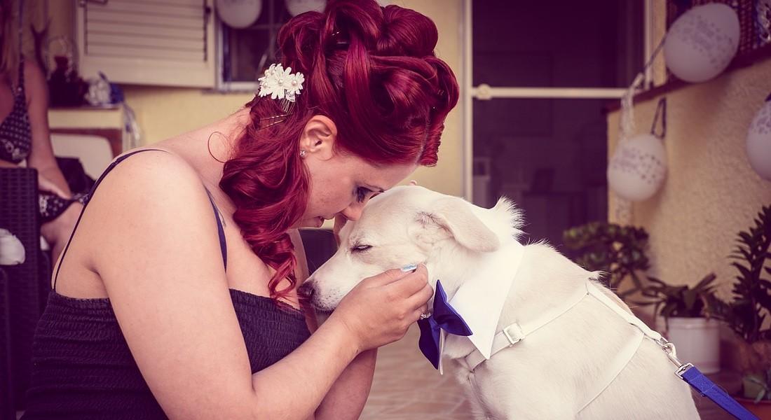 ©www.weddingdogsitter.com © Ansa