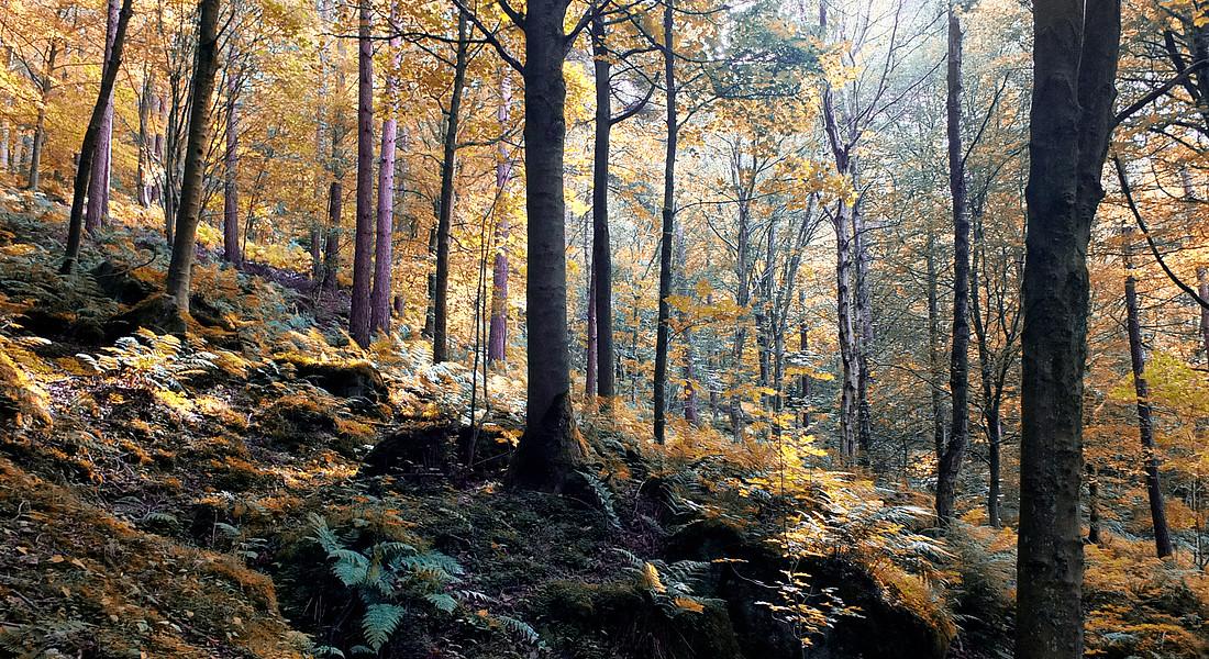 Un bosco in autunno foto Philip Openshaw iStock. © Ansa