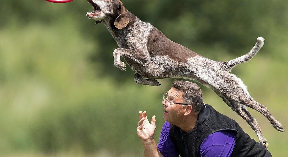 Germany Dog Frisbee © AP