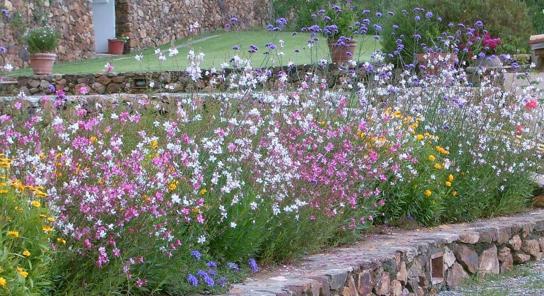 Giardini odorosi (foto vivaio La Parrina) © Ansa
