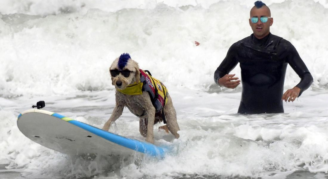 World Dog Surfing Championships © EPA
