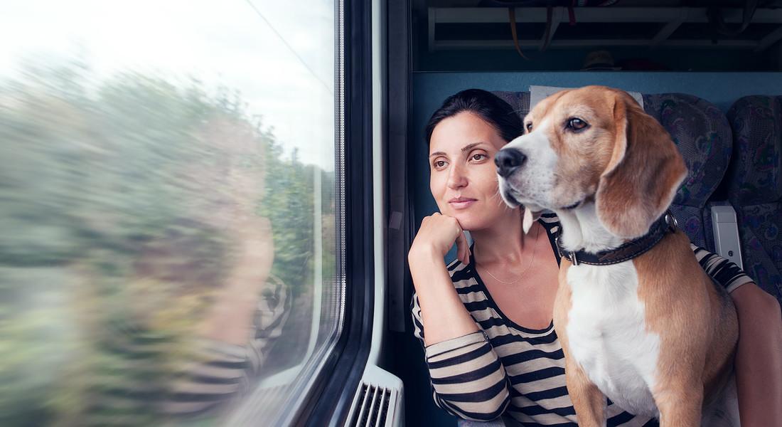 In treno con il cane. foto iStock. © Ansa