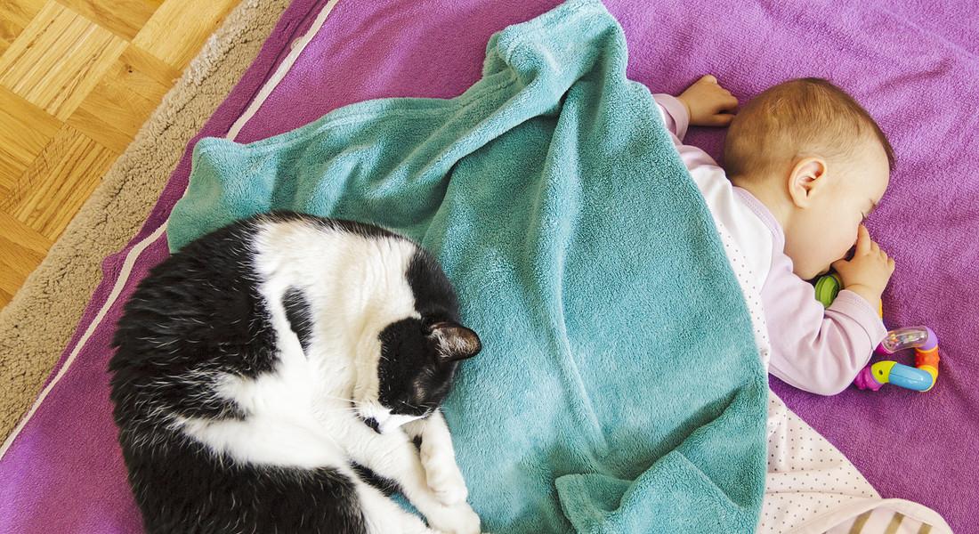 Bebè In Arrivo Quando A Casa Cè Un Gatto I Miti Da Sfatare E 5