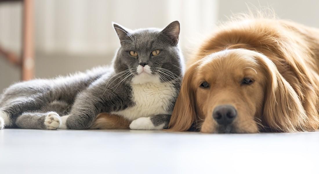 Un cane e un gatto foto iStock. © Ansa